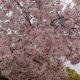 春、麗らかな気持ちになるブログを目指して(笑)